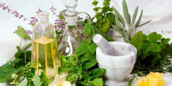 Жиросжигающие травы для быстрого похудения: механизм действия и показания к применению