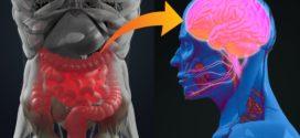 Танициты передают сигнал в мозг о насыщении