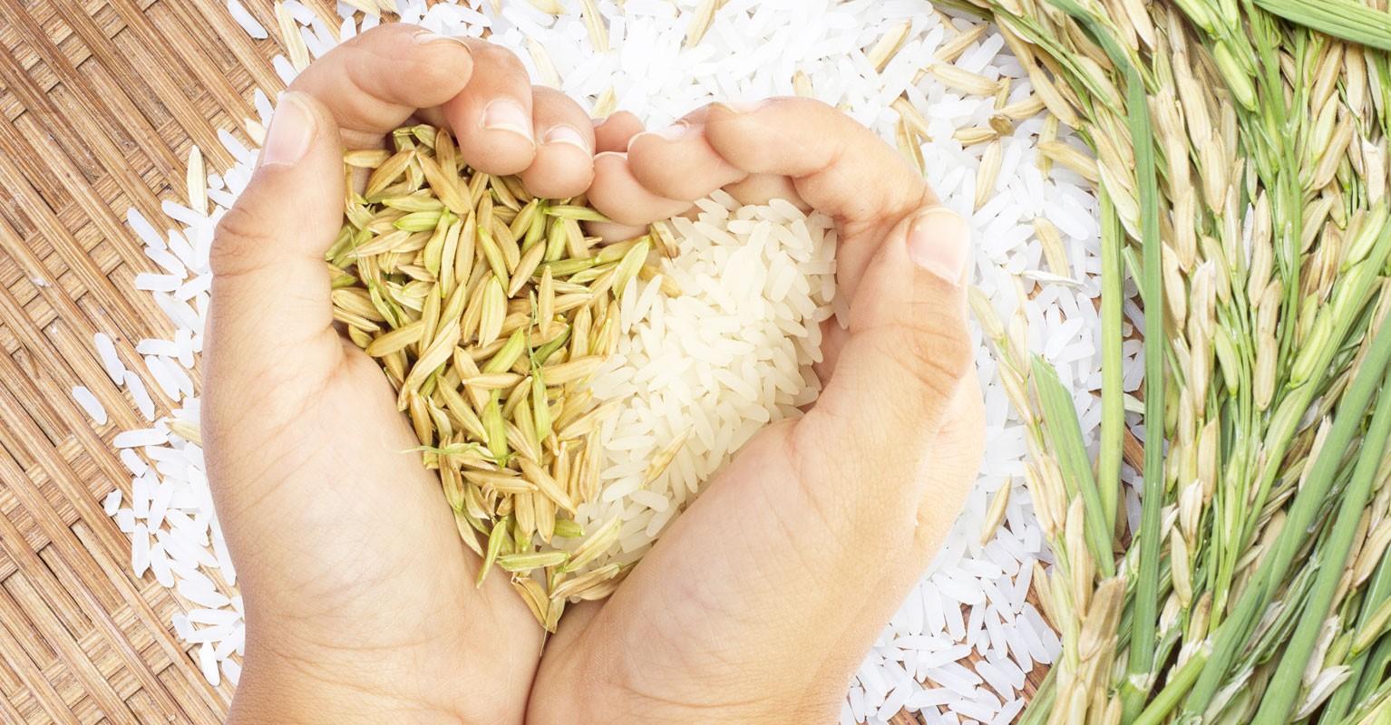 Промытый Рис Для Похудения. Как похудеть на рисе